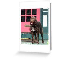 Shag Dog Blues Greeting Card
