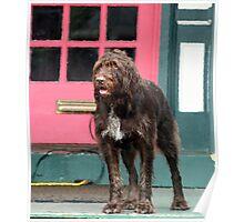 Shag Dog Blues Poster