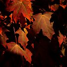 Take it or leave it, fall is here. by jammingene