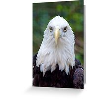 Bald Eagle Checking Me Out Greeting Card