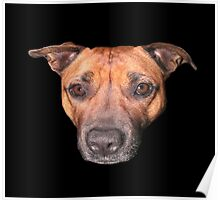 Staffordshire Bull Terrier, Face Of An Angel. Poster