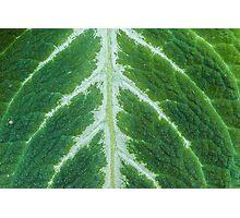 leaf macro Photographic Print