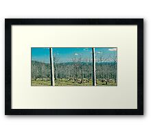 Trees in the country field Framed Print