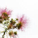 Electric Flowers by Antonio Arcos aka fotonstudio