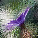 Purple Explosion by Antonio Arcos aka fotonstudio