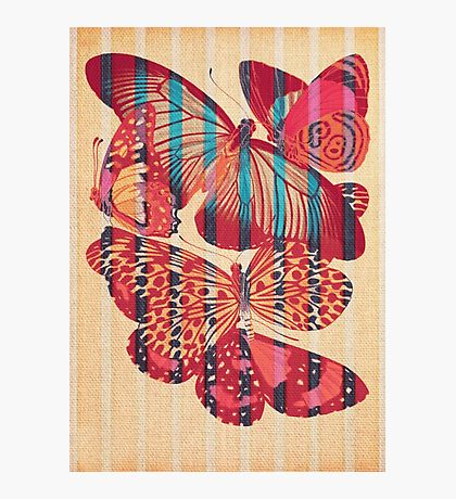 Butterflies in Strips Photographic Print