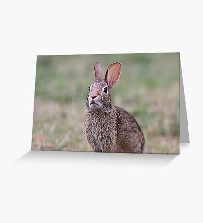 Cottontail close up Greeting Card