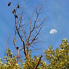 Birds & Moon by Daniel Owens
