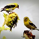 Sunflowers and Finches - 9 of 9 by Rosemary Sobiera