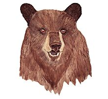 Mr Bear Photographic Print