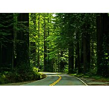 Avenue of the Giants Photographic Print