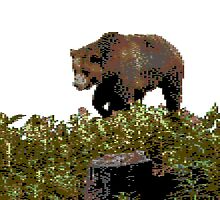 Bear 8 Bits by Exponente