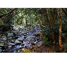 Rainforest Trek Photographic Print