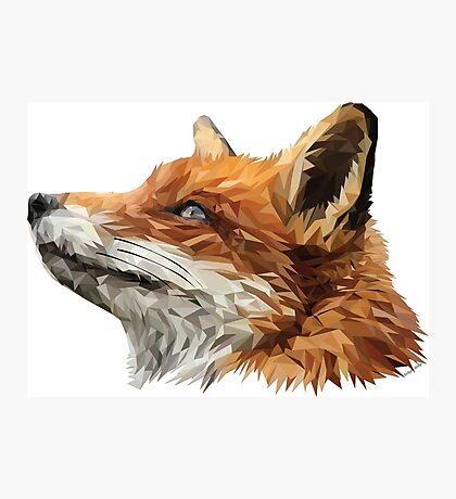 The Sly Fox Photographic Print