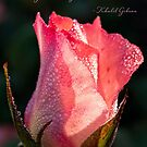 Inspirational rose by Celeste Mookherjee