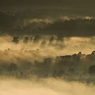 Yarra Valley by Timo Balk