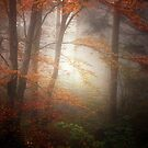 Forest Light by Philippe Sainte-Laudy