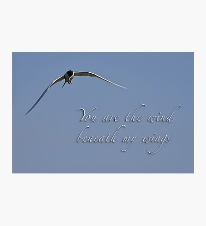 Wind beneath my wings Photographic Print