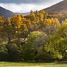 Lighting up the trees, Glen Lyon, Scotland by Cliff Williams