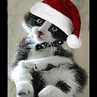 Charlie Kitten by Ladymoose