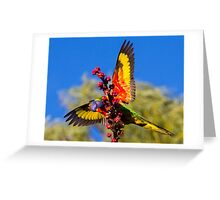 Rainbow Lorikeet in my back yard Greeting Card