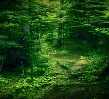 Emerald Forest by Dorothy  Pinder