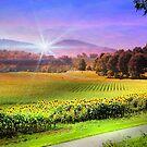 Biltmore Sunflower Field by Darlene Lankford Honeycutt