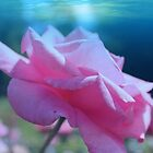 Beautiful pink rose flower in fancy blue background. Floral photo art. by naturematters