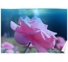 Beautiful pink rose flower in fancy blue background. Floral photo art. Poster