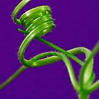 Squash Tendril Macro by Sandra Foster
