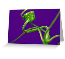 Squash Tendril Macro Greeting Card