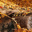 Logs and Leaves by marybedy