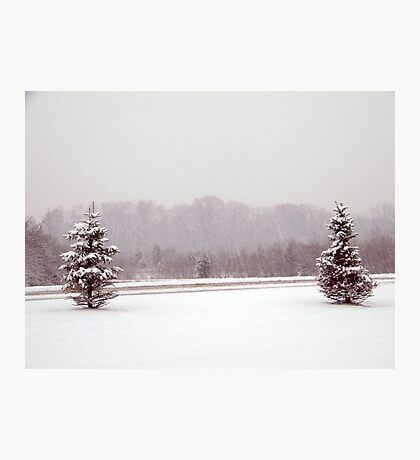 winter tree scene Photographic Print