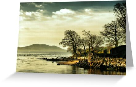 Where the river meets the sea by Agnes McGuinness