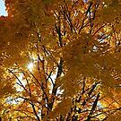Yellow Fall Maple and Sun 1 by marybedy
