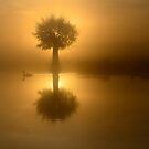 Little Tree by Kasia Nowak