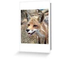Smiling Red Fox Greeting Card
