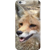 Smiling Red Fox iPhone Case/Skin