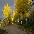 Golden November in Lank 3 by David A. L. Davies