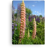 Lupin Summer Canvas Print