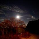 Super Moon by evon ski