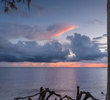 Cypress Knees by AhArtography