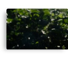 Orb Spider & Web Sunlight Shining Through Canvas Print