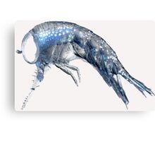 Amphipods Canvas Print