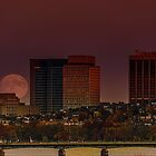 Moon Rise by LudaNayvelt