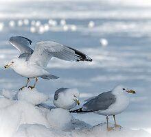ICE LANDING by Diane Peresie