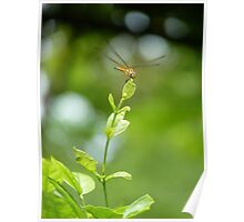 Move with the Wind id1080241 dragonfly Poster
