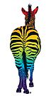 Rainbow Zebra by Jacqueline Eden