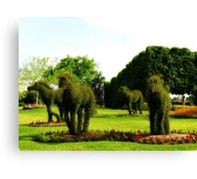 Topiary Horses Canvas Print