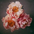 peonies by Sue Hammond